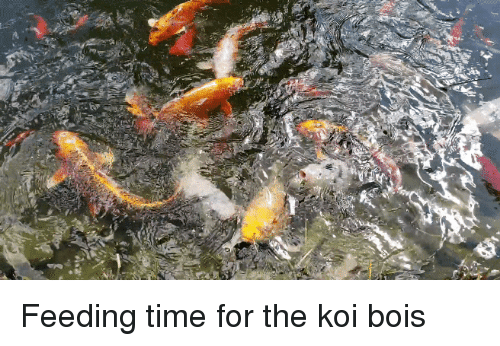Time, Koi, and For