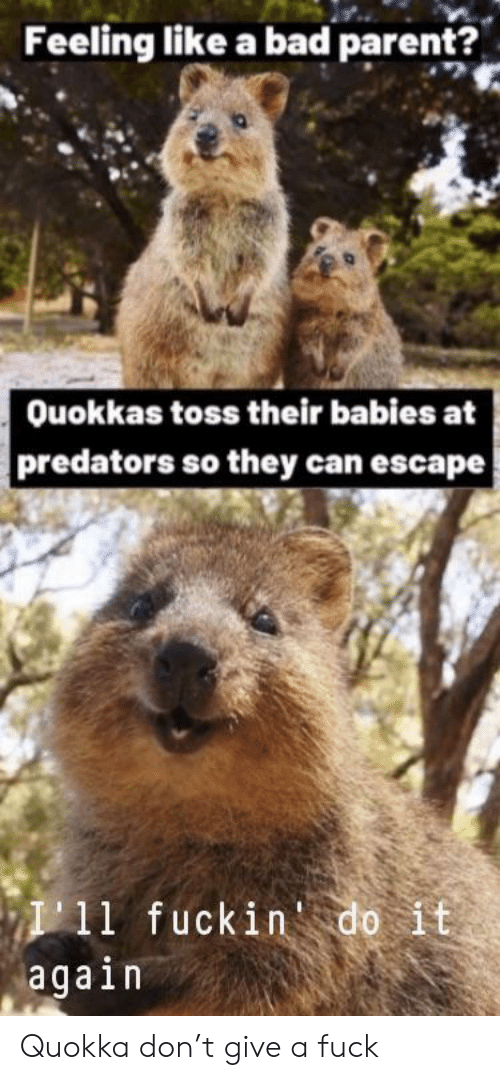 Bad, Do It Again, and Fuck: Feeling like a bad parent?  Ouokkas toss their babies at  predators so they can escape  I11 fuckin do it  again Quokka don't give a fuck