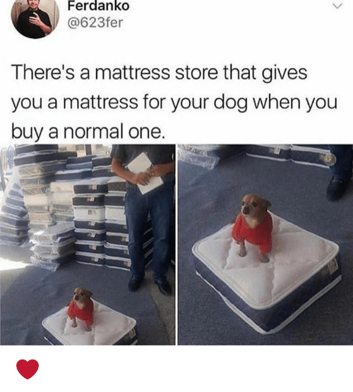 Memes, Mattress, and 🤖: Ferdanko  @623fer  There's a mattress store that gives  you a mattress for your dog when you  buy a normal one ❤️