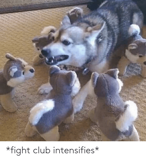 club: *fight club intensifies*