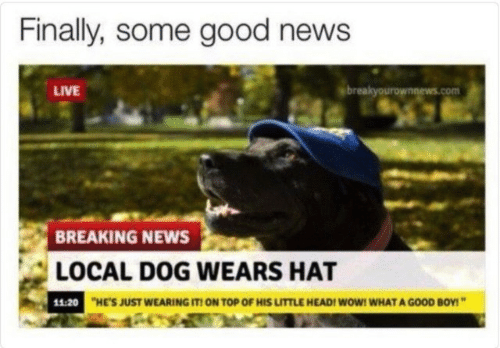 """Head, News, and Wow: Finally, some good news  LIVE  breakyourownnews.com  BREAKING NEWS  LOCAL DOG WEARS HAT  11:20  HE'S JUST WEARING IT! ON TOP OF HIS LITTLE HEAD! WoW! WHAT A GOOD BOY!"""""""