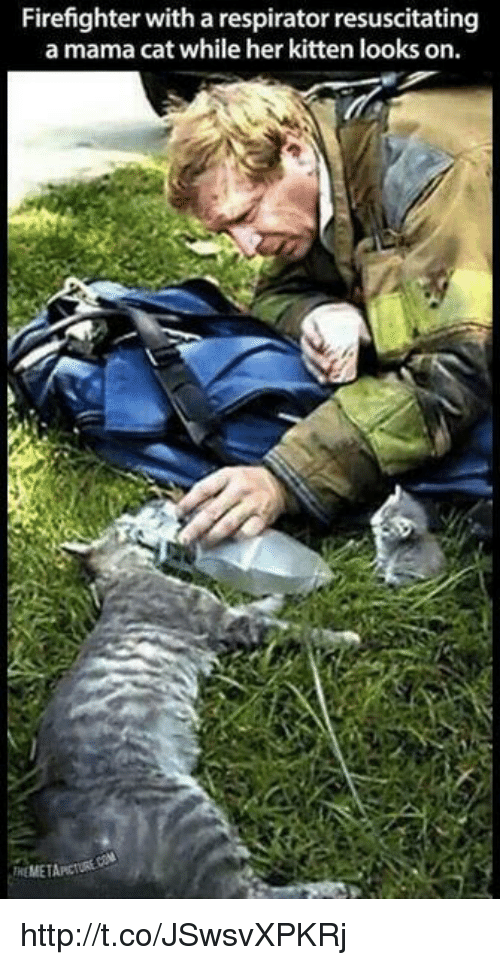 resuscitation: Firefighter with a respirator resuscitating  a mama cat while her kitten looks on.  MEMETAPCI http://t.co/JSwsvXPKRj