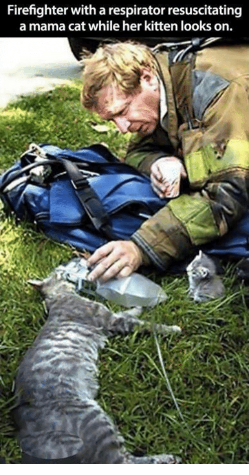 resuscitation: Firefighter with a respirator resuscitating  a mama cat while her kitten looks on.