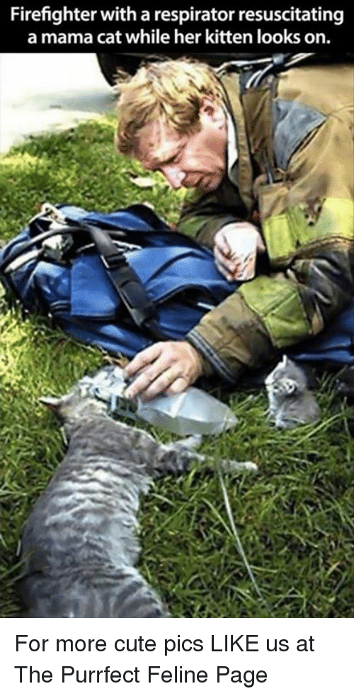 resuscitation: Firefighter with a respirator resuscitating  a mama cat while her kitten looks on. For more cute pics LIKE us at The Purrfect Feline Page