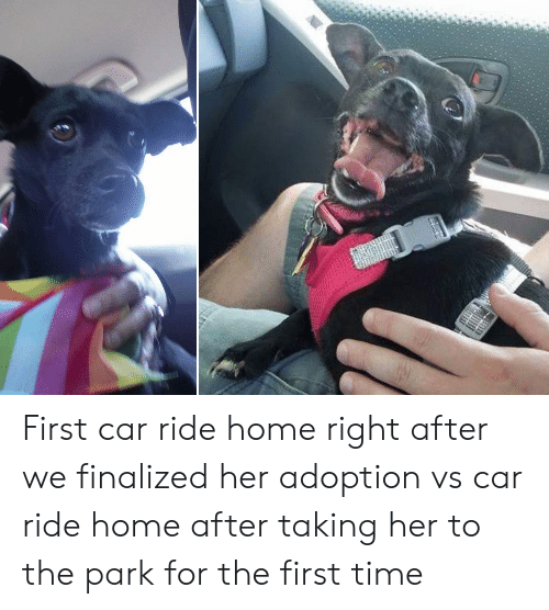 Home, Time, and Her: First car ride home right after we finalized her adoption vs car ride home after taking her to the park for the first time