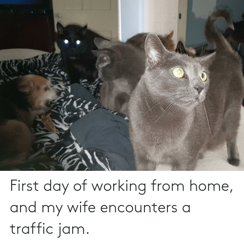 Traffic: First day of working from home, and my wife encounters a traffic jam.
