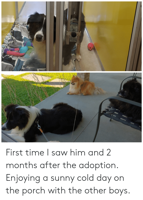 Saw, Time, and Cold: First time I saw him and 2 months after the adoption. Enjoying a sunny cold day on the porch with the other boys.