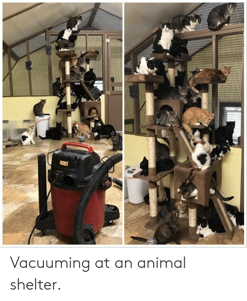 Animal Shelter: fitte Vacuuming at an animal shelter.