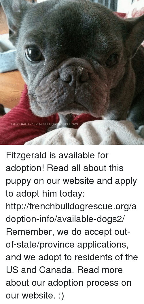 us-and-canada: FITZGERALD FRENCHBULLDO RESCUE ORG Fitzgerald is available for adoption! Read all about this puppy on our website <location, likes, dislikes> and apply to adopt him today: http://frenchbulldogrescue.org/adoption-info/available-dogs2/  Remember, we do accept out-of-state/province applications, and we adopt to residents of the US and Canada. Read more about our adoption process on our website. :)