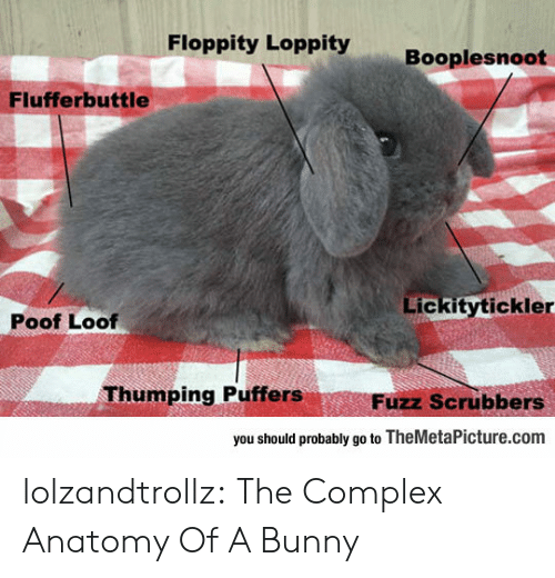 poof: Floppity Loppity  Booplesnoot  Flufferbuttle  Lickitytickler  Poof Loof  Thumping Puffers  Fuzz Scrubbers  you should probably go to TheMetaPicture.com lolzandtrollz:  The Complex Anatomy Of A Bunny