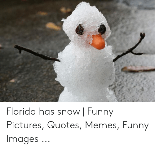 Funny Snow Memes: Florida has snow | Funny Pictures, Quotes, Memes, Funny Images ...