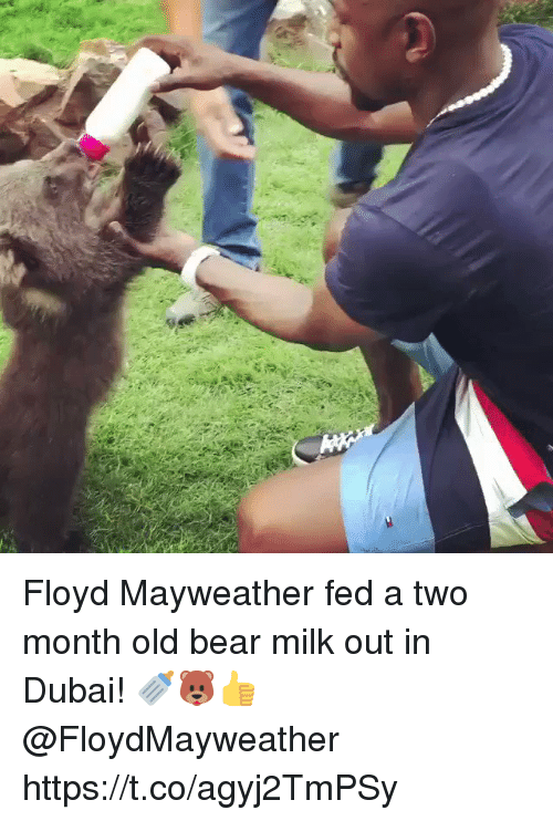 Floyd Mayweather, Mayweather, and Bear: Floyd Mayweather fed a two month old bear milk out in Dubai! 🍼🐻👍 @FloydMayweather https://t.co/agyj2TmPSy