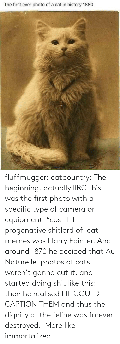 "Forever: fluffmugger:  catbountry: The beginning. actually IIRC this was the first photo with a specific type of camera or equipment  ""cos THE progenative shitlord of  cat memes was Harry Pointer. And around 1870 he decided that Au Naturelle  photos of cats weren't gonna cut it, and started doing shit like this:  then he realised HE COULD CAPTION THEM and thus the dignity of the feline was forever destroyed.     More like immortalized"