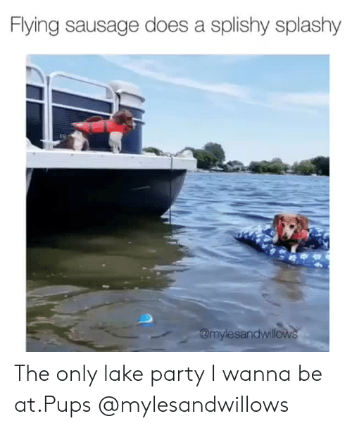 Instagram, Party, and Target: Flying sausage does a splishy splashy  @mylesandwillows The only lake party I wanna be at.Pups @mylesandwillows