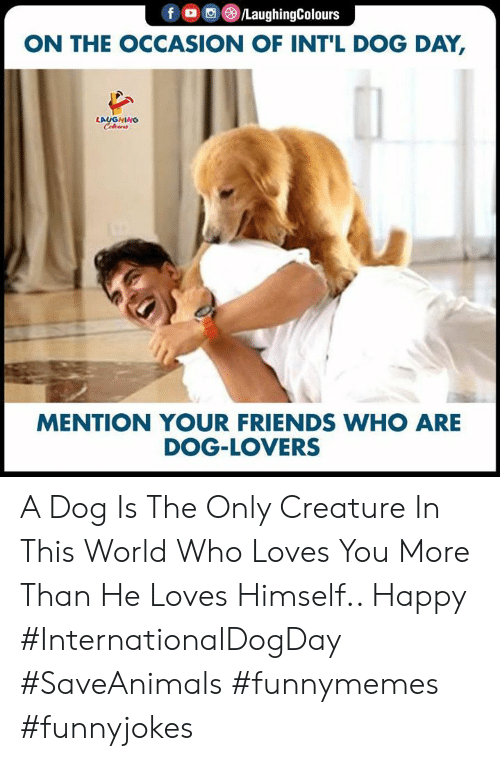 Indianpeoplefacebook: foC/LaughingColours  ON THE OCCASION OF INT'L DOG DAY,  LAUGHING  Celewrs  MENTION YOUR FRIENDS WHO ARE  DOG-LOVERS A Dog Is The Only Creature In This World Who Loves You More Than He Loves Himself.. Happy #InternationalDogDay #SaveAnimals #funnymemes #funnyjokes