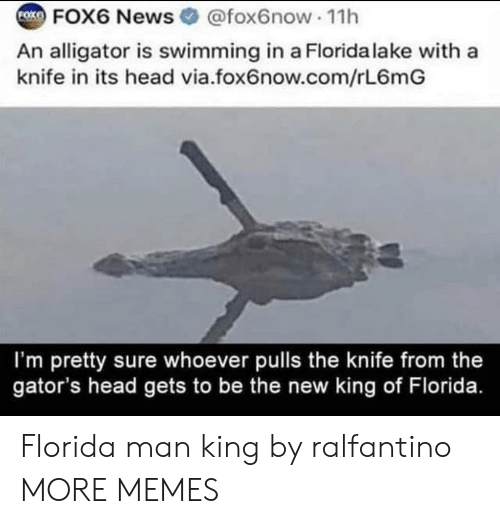 Alligator: FOK  FOX6 News @fox6now 11h  An alligator is swimming in a Florida lake with a  knife in its head via.fox6now.com/rL6mG  I'm pretty sure whoever pulls the knife from the  gator's head gets to be the new king of Florida. Florida man king by ralfantino MORE MEMES
