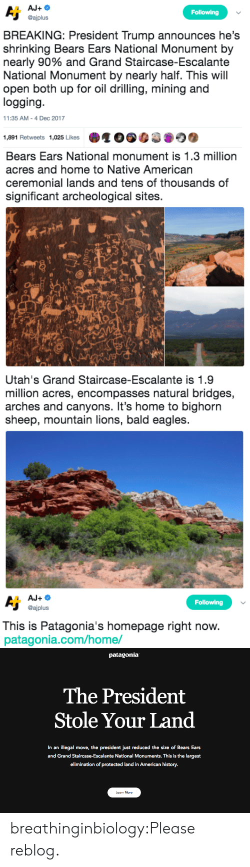 Philadelphia Eagles, Native American, and Tumblr: Following  @ajplus  BREAKING: President Trump announces he's  shrinking Bears Ears National Monument by  nearly 90% and Grand Staircase-Escalante  National Monument by nearly half. This will  open both up for oil drilling, mining and  logging  11:35 AM-4 Dec 2017  1,891 Retweets 1,025 Likes   Bears Ears National monument is 1.3 million  acres and home to Native American  ceremonial lands and tens of thousands of  significant archeological sites.  sh   Utah's Grand Staircase-Escalante is 1.9  million acres, encompasses natural bridges,  arches and canyons. It's home to bighorn  sheep, mountain lions, bald eagles   Following  @ajplus  This is Patagonia's homepage right now  patagonia.com/home/   patagonia  The President  Stole Your Land  In an illegal move, the president just reduced the size of Bears Ears  and Grand Staircase-Escalante National Monuments. This is the largest  elimination of protected land in American history.  Learn More breathinginbiology:Please reblog.