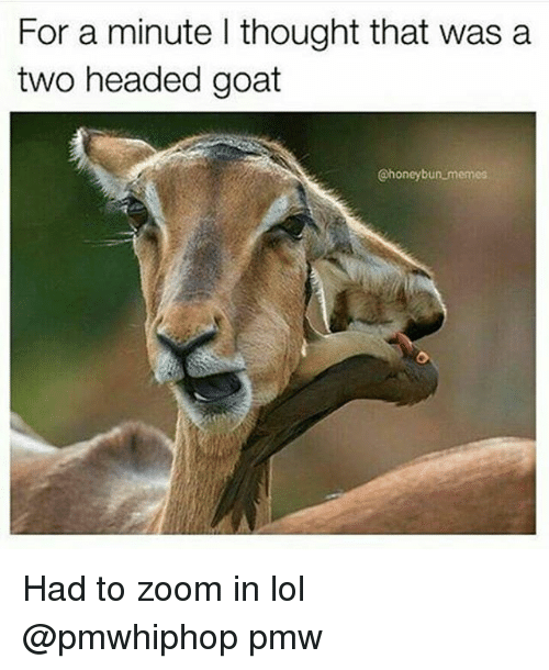 Zooming In: For a minute l thought that was a  two headed goat  @honey bun memes Had to zoom in lol @pmwhiphop pmw