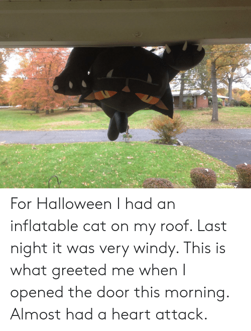 inflatable: For Halloween I had an inflatable cat on my roof. Last night it was very windy. This is what greeted me when I opened the door this morning. Almost had a heart attack.