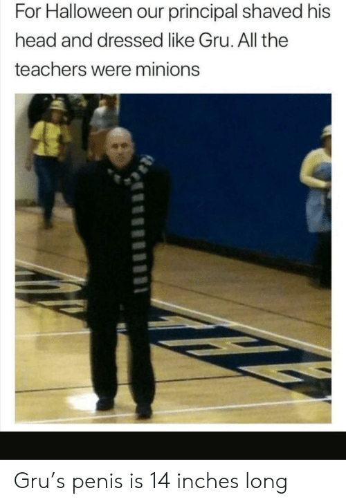 Gru: For Halloween our principal shaved his  head and dressed like Gru. All the  teachers were minions Gru's penis is 14 inches long