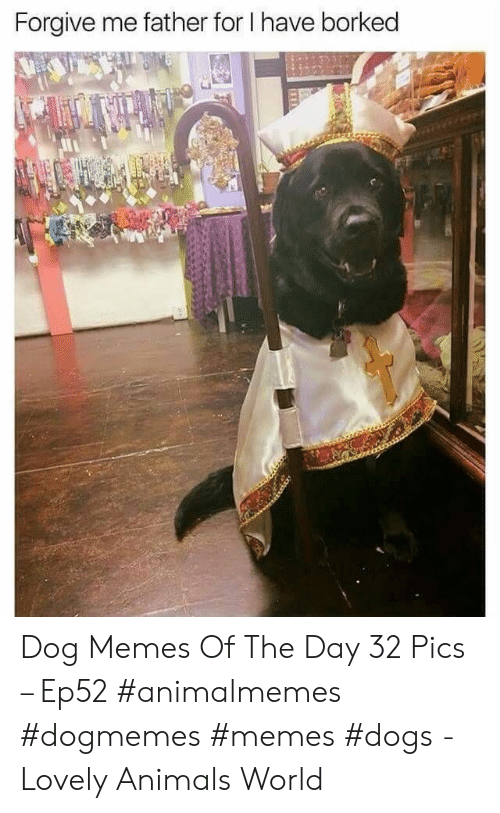 Animals, Dogs, and Memes: Forgive me father for I have borked Dog Memes Of The Day 32 Pics – Ep52 #animalmemes #dogmemes #memes #dogs - Lovely Animals World