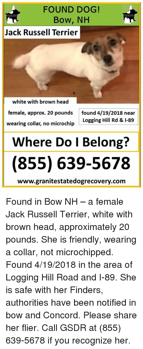 Head, Memes, and White: FOUND DOG!  Bow, NH  Jack Russell Terrier  white with brown head  female, approx. 20 pounds  found 4/19/2018 near  wearing collar, no microchip LoggingHIl ld-89  Where Do l Belong?  (855) 639-5678  www.granitestatedogrecovery.com Found in Bow NH – a female Jack Russell Terrier, white with brown head, approximately 20 pounds.  She is friendly, wearing a collar, not microchipped.  Found 4/19/2018 in the area of Logging Hill Road and I-89.  She is safe with her Finders, authorities have been notified in bow and Concord.  Please share her flier. Call GSDR at (855) 639-5678 if you recognize her.