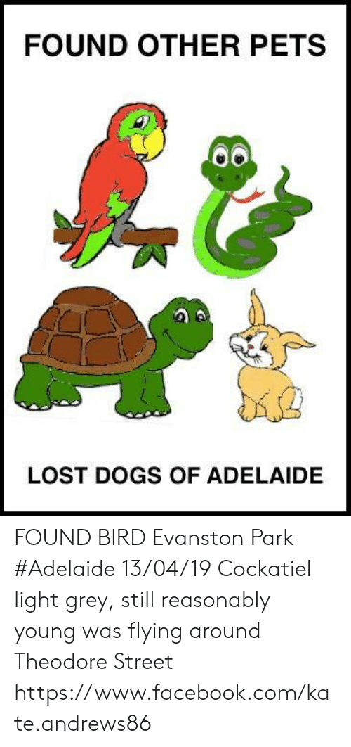 Dogs, Facebook, and Memes: FOUND OTHER PETS  LOST DOGS OF ADELAIDE FOUND BIRD Evanston Park #Adelaide 13/04/19 Cockatiel light grey, still reasonably young was flying around Theodore Street  https://www.facebook.com/kate.andrews86