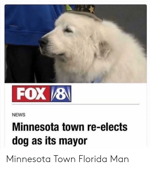 Florida Man, News, and Florida: FOX 8  NEWS  Minnesota town re-elects  dog as its mayor Minnesota Town  Florida Man