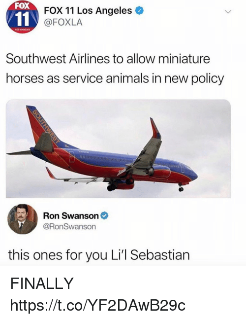 swanson: FOX  FOX 11 Los Angeles  @FOXLA  LOS ANGELES  Southwest Airlines to allow miniature  horses as service animals in new policy  Ron Swanson *  @RonSwanson  this ones for you Li'l Sebastian FINALLY https://t.co/YF2DAwB29c