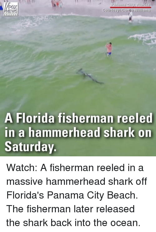 oceaneering: FOX  NEWS  Courtesy Curtis Williams  A Florida fisherman reeled  in a hammerhead shark on  Saturday Watch: A fisherman reeled in a massive hammerhead shark off Florida's Panama City Beach. The fisherman later released the shark back into the ocean.