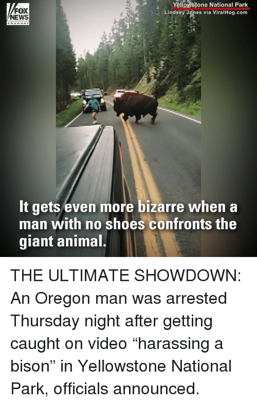 "bison: FOX  NEWS  Yellowstone National Park  Lindsey Jones via ViralHog.com  chan nol  It gets even more bizarre when a  man with no shoes confronts the  giant animal THE ULTIMATE SHOWDOWN: An Oregon man was arrested Thursday night after getting caught on video ""harassing a bison"" in Yellowstone National Park, officials announced."