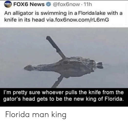Alligator: FOX6 News @fox6now 1h  FOXE  An alligator is swimming in a Florida lake with a  knife in its head via.fox6now.com/rL6mG  I'm pretty sure whoever pulls the knife from the  gator's head gets to be the new king of Florida. Florida man king