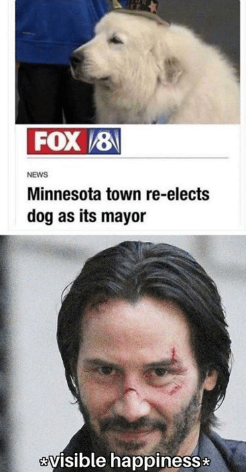 Dank, News, and Minnesota: FOX8  NEWS  Minnesota town re-elects  dog as its mayor  visible happiness