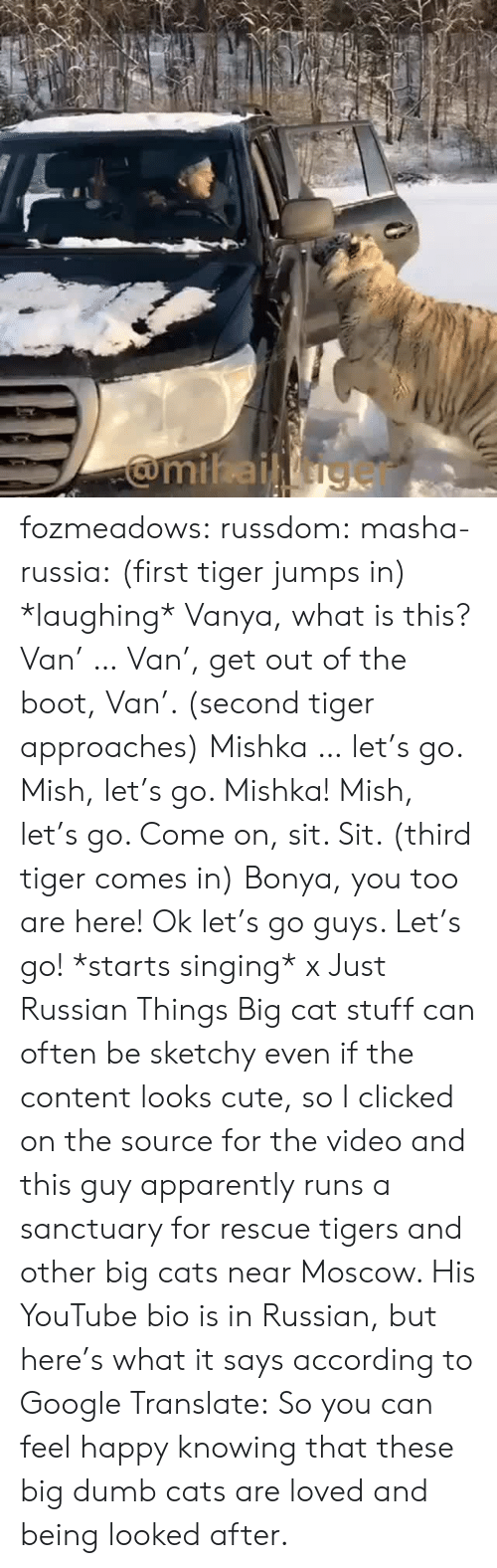 big cat: fozmeadows: russdom:  masha-russia: (first tiger jumps in) *laughing* Vanya, what is this? Van' … Van', get out of the boot, Van'. (second tiger approaches) Mishka … let's go. Mish, let's go. Mishka! Mish, let's go. Come on, sit. Sit. (third tiger comes in) Bonya, you too are here! Ok let's go guys. Let's go! *starts singing* x Just Russian Things  Big cat stuff can often be sketchy even if the content looks cute, so I clicked on the source for the video and this guy apparently runs a sanctuary for rescue tigers and other big cats near Moscow. His YouTube bio is in Russian, but here's what it says according to Google Translate: So you can feel happy knowing that these big dumb cats are loved and being looked after.
