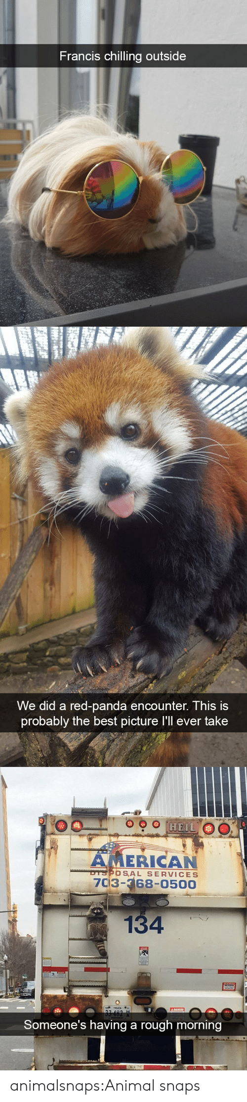 Target, Tumblr, and Panda: Francis chilling outsi  de   We did a red-panda encounter. This is  probably the best picture I'll ever take   AMERICAN  7C3-68-0500  OSAL SERVICES  134  Someone's having a rough morning animalsnaps:Animal snaps