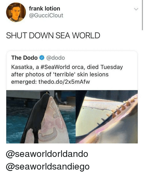 SeaWorld: frank lotion  @GucciClout  SHUT DOWN SEA WORLD  The Dodo @dodo  Kasatka, a #SeaWorld orca, died Tuesday  after photos of 'terrible' skin lesions  emerged: thedo.do/2x5mAfw @seaworldorldando @seaworldsandiego