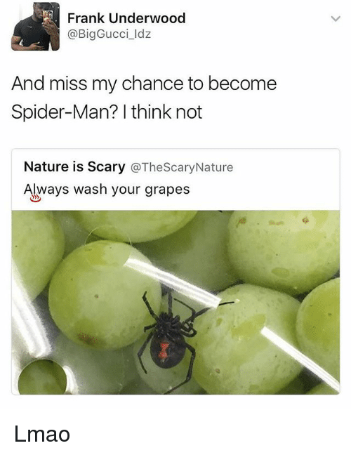 Lmao, Memes, and Spider: Frank Underwood  @BigGucci_ldz  And miss my chance to become  Spider-Man? I think not  Nature is Scary @TheScaryNature  Always wash your grapes Lmao