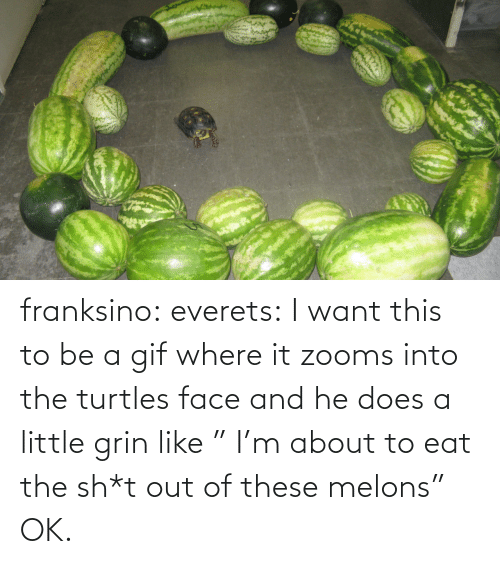"""turtles: franksino: everets:  I want this to be a gif where it zooms into the turtles face and he does a little grin like """" I'm about to eat the sh*t out of these melons""""  OK."""