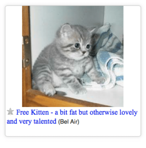 Free, Fat, and Air: Free Kitten - a bit fat but otherwise lovely  and very talented (Bel Air)