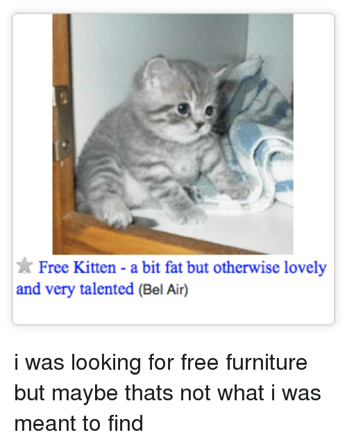 Free, Furniture, and Fat: Free Kitten - a bit fat but otherwise lovely  and very talented (Bel Air) i was looking for free furniture but maybe thats not what i was meant to find