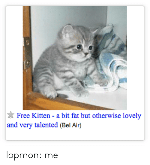 Tumblr, Blog, and Free: Free Kitten - a bit fat but otherwise lovely  and very talented (Bel Air) lopmon:  me
