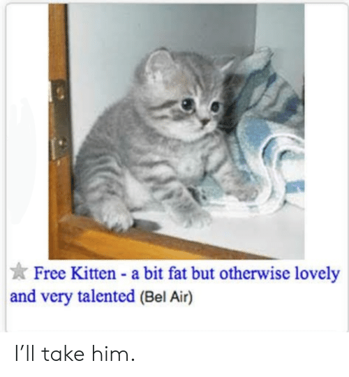 Free, Fat, and Air: Free Kitten a bit fat but otherwise lovely  and very talented (Bel Air) I'll take him.
