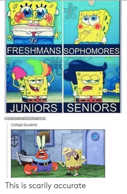 college students: FRESHMANS SOPHOMORES  JUNIORS SENIORS  insideweareallstilldreaming:  College Students This is scarily accurate