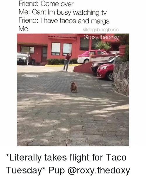 taco tuesday: Friend: Come over  Me: Cant Im busy watching tv  Friend: I have tacos and margs  Me:  @dogsbeingbasic  @roxy.thedoxy *Literally takes flight for Taco Tuesday* Pup @roxy.thedoxy