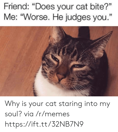 """bite: Friend: """"Does your cat bite?""""  Me: """"Worse. He judges you. Why is your cat staring into my soul? via /r/memes https://ift.tt/32NB7N9"""