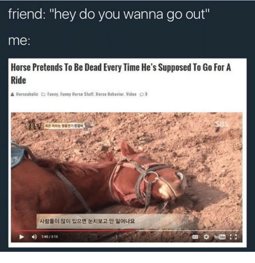 """Funny, Horse, and Stuff: friend: """"hey do you wanna go out""""  me:  Horse Pretends To Be Dead Every Time He's Supposed To Go For A  Ride  & Horseaholic Funny, Funny Horse Stuff. Horse Behavior. Video 9  온척하는 명를연기진감。  사람들이 많이 있으면 눈치보고 안 일어나요  4)  1:45 / 315  Tube  GO"""