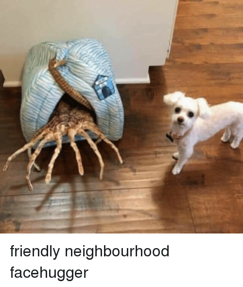 Facehugger and Friendly: friendly neighbourhood facehugger