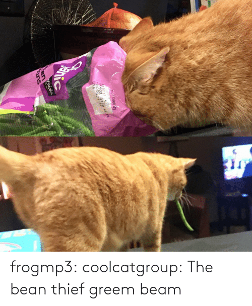 thief: frogmp3: coolcatgroup: The bean thief   greem beam