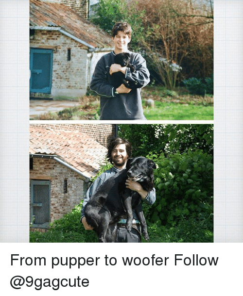 Memes, 🤖, and Woofer: From pupper to woofer Follow @9gagcute