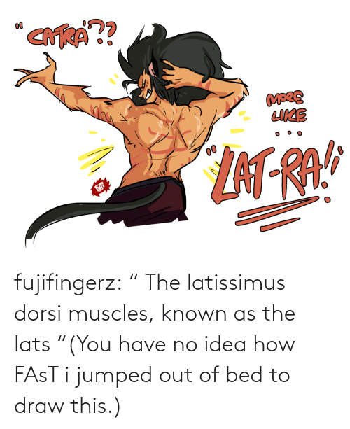 "visual: fujifingerz:    "" The latissimus dorsi muscles, known as the lats  ""(You have no idea how FAsT i jumped out of bed to draw this.)"